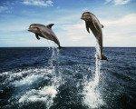 ドルフィンウォッチング バリ マリン スポーツ 自由 海 アクティビティ