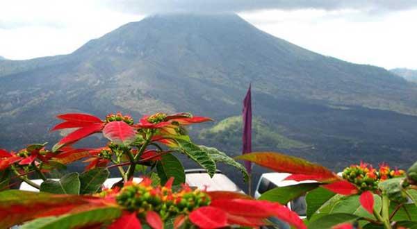 キンタマーニ 高原 ツアー バトゥール 火山 観光 バリ島 内 ツアー