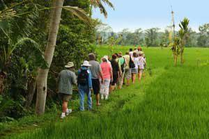 バリ島ライステラストレッキング バリ島 オプショナル ツアー