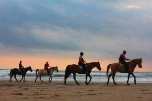 バリ島乗馬体験ツアー バリ島 オプショナル ツアー 人気 遊ぶ プラン 海 アクティビティ