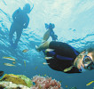snorkeling05