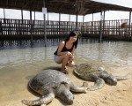 亀の島 バリ マリン スポーツ 自由 海 アクティビティ