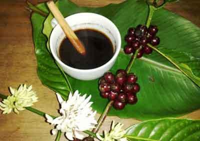 バリコーヒー, バリコーヒー農園