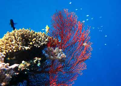 出資者がサンゴ礁の保護を計画, サンゴ礁