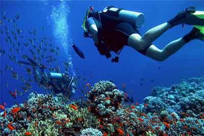 バリダイビング. サンゴ礁. バリニュース