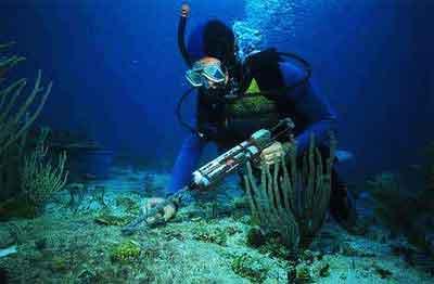 環境保護, 珊瑚を移植する