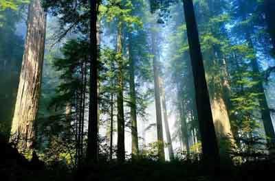 インドネシア 森林, インドネシア 森林警備増員