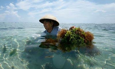 海草シンポジウム
