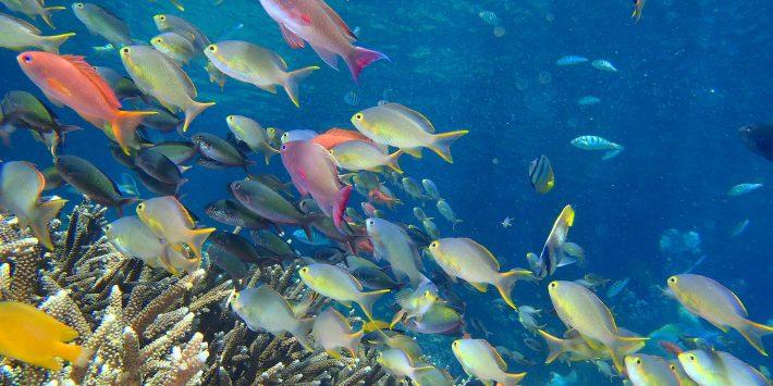 別世界 シュノーケル レンボンガン島 + ペニダ島 +チェニガン島 とレンボンガン島 観光