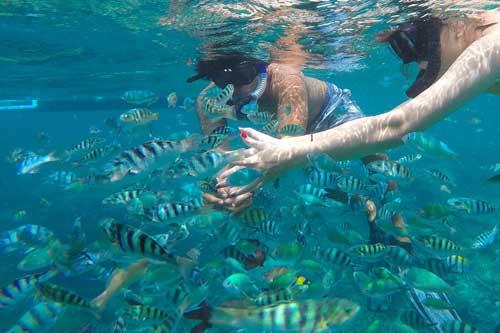 ぺニダ島 レンボンガン島 どちらも シュノーケル にぴったりの海